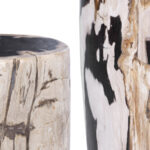 Пенек из окаменелого дерева black and white  - фото 2