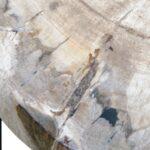 PETRIFIED WOOD COFFEETABLE S Окаменелое дерево  - фото 2